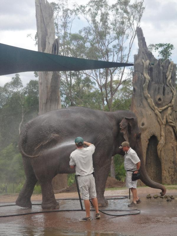 The Steve Irwin Australia Zoo in Beerwah, Queensland Review