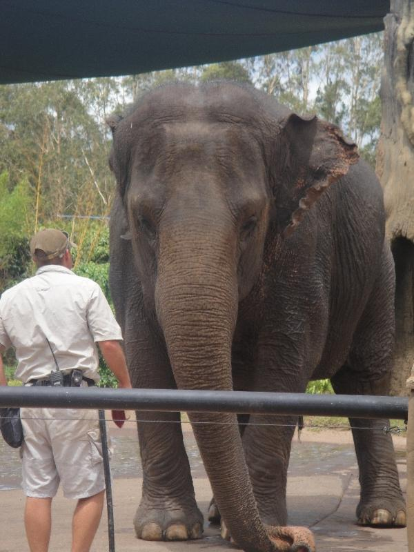 The Steve Irwin Australia Zoo in Beerwah, Queensland Vacation Diary
