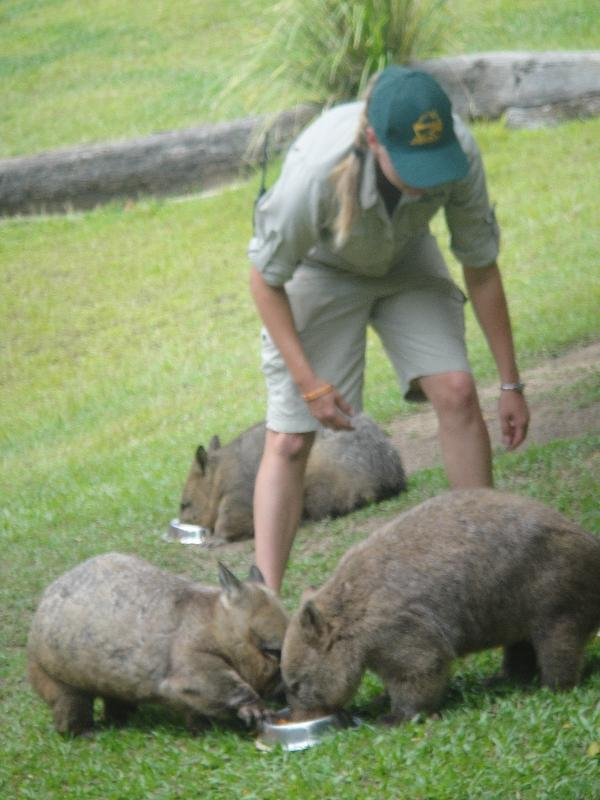 The Steve Irwin Australia Zoo in Beerwah, Queensland Photos