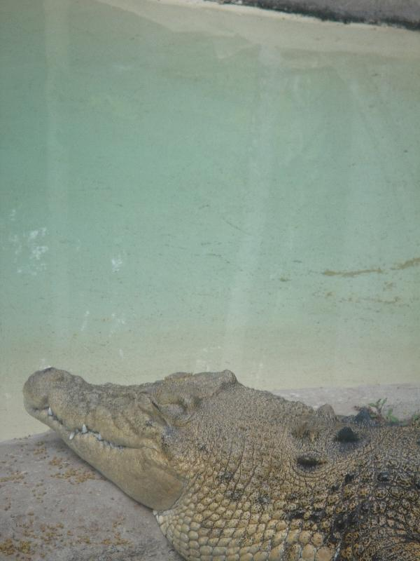 The Steve Irwin Australia Zoo in Beerwah, Queensland Blog Photography