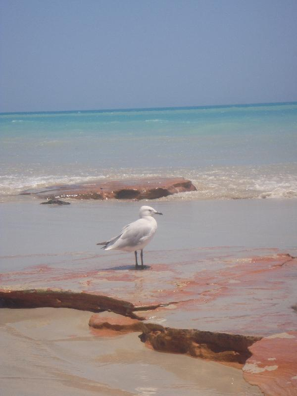The gorgeous beach in Broome, Australia
