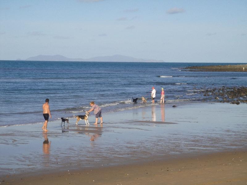 Dogs at Eimeo Beach in Mackay, Australia