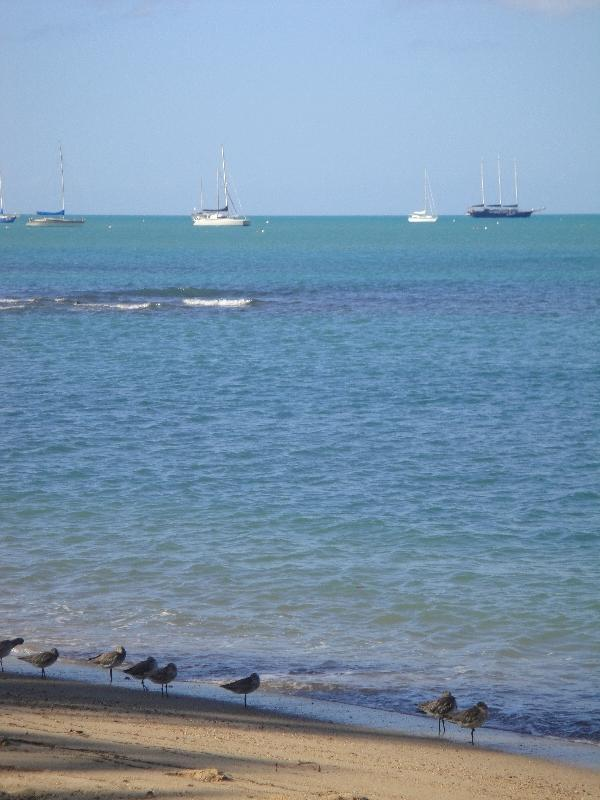 Airlie Beach Australia Holiday Tips