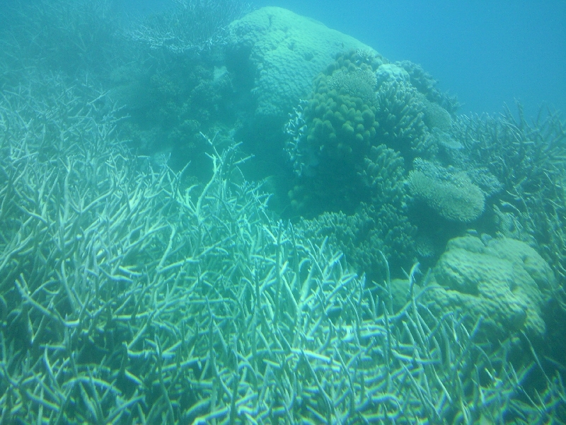 Coral viewing at Great Barrier Reef, Cairns Australia