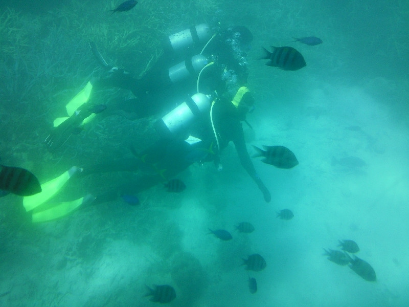 Diving the Great Barrier Reef, Cairns Australia