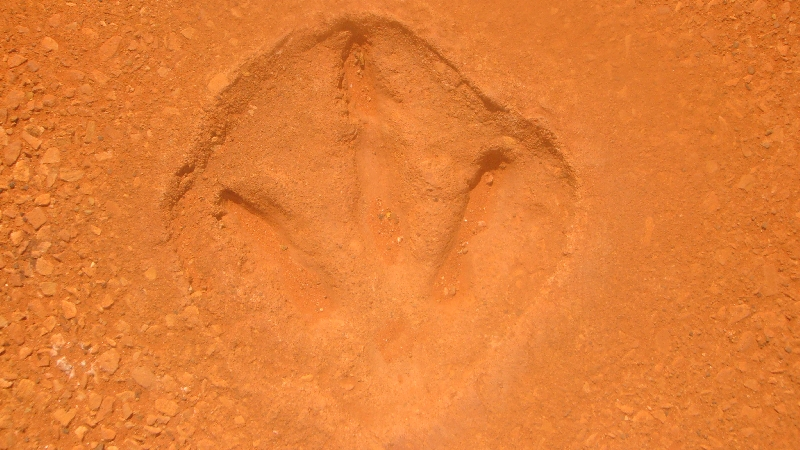 Dinosaur footprints at Gantheaume Point, Broome Australia