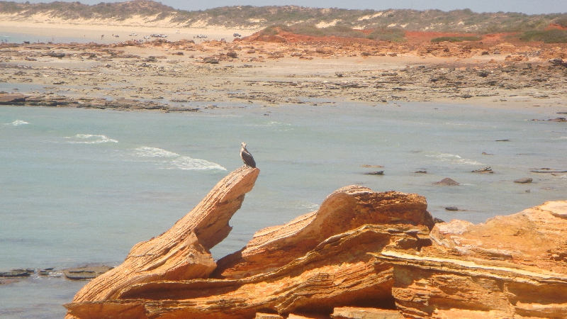 Wildlife on Gantheaume Point, Broome, Australia