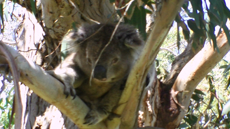 The Gorge Wildlife Park, Adelaide, Cudlee Creek Australia