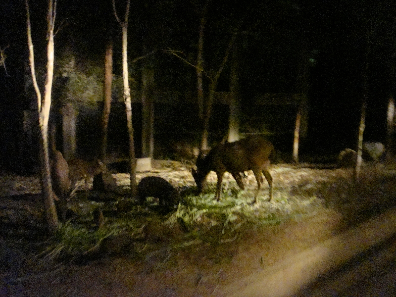 Pictures of the Night Safari , Chiang Mai Thailand