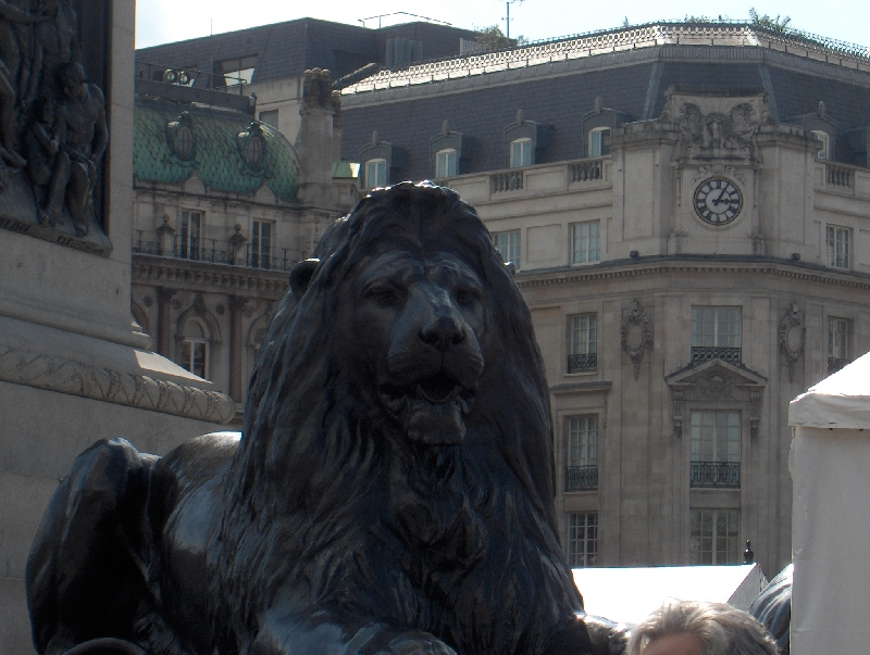 London United Kingdom Static Lion on Trafalgar Square
