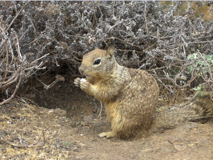 Cute Squirrel at Grand Canyon NP, Flagstaff United States