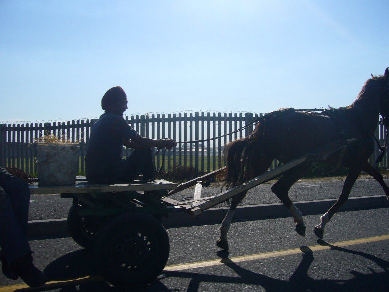 Horse and Carrage in Cape Town, South Africa