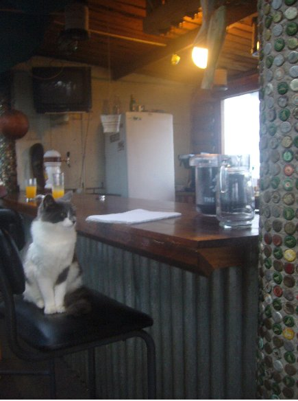 The kitty kat of the hostel, Knysna South Africa