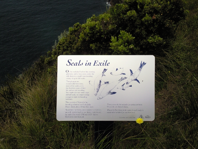 At one of the seal lookouts, Australia