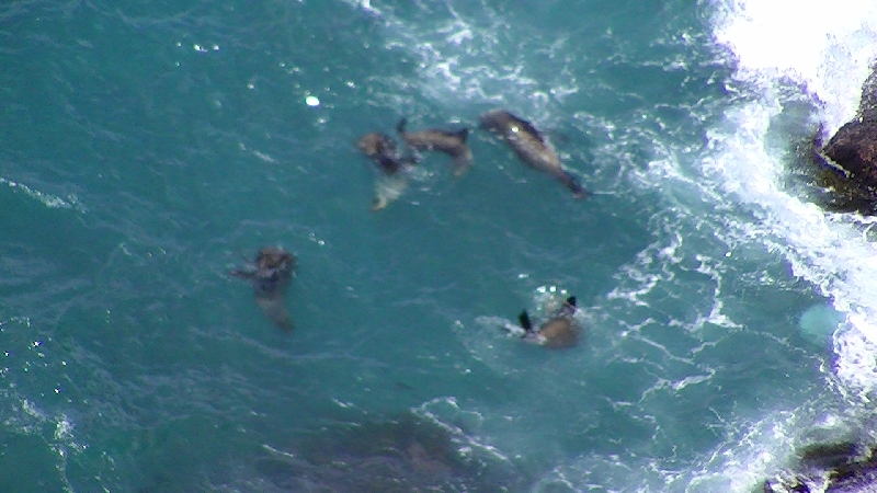 Photos of the seals in Cape Bridgewater, Australia