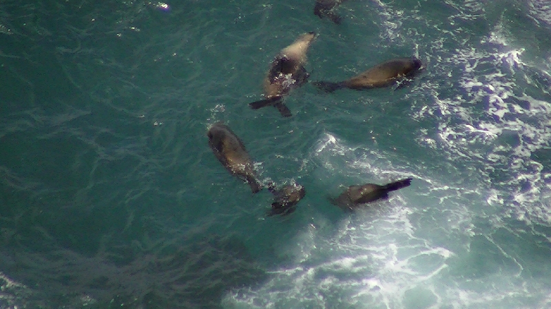 Cape Bridgewater Australia Pictures of playful seals