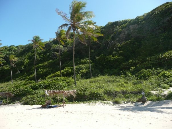 Palms and white sand on Pipa Beach, Pipa Brazil