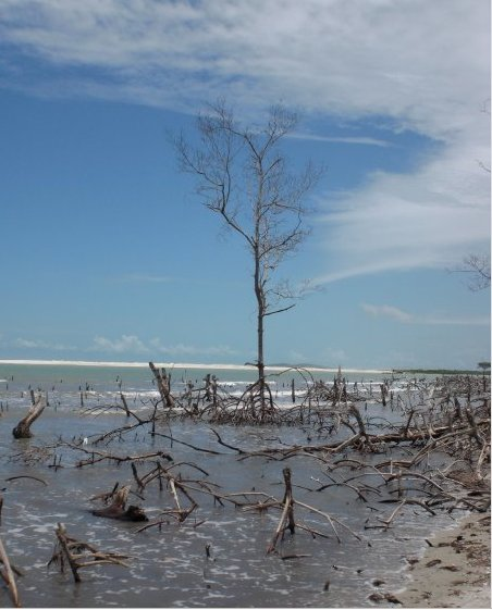 Photos of mangroves in Jericoacoara, Brazil