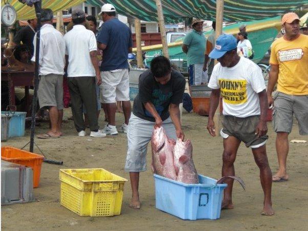 Fish market in Puerto Lopez, Ecuador