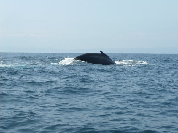 Whale Watching in Puerto Lopez, Ecuador