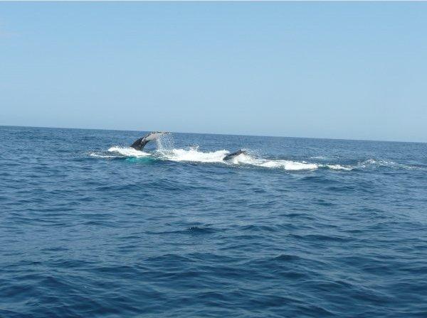 Spotting whales in Ecuador, Ecuador