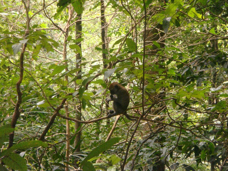 Baby monkey on Ko Lanta, Thailand