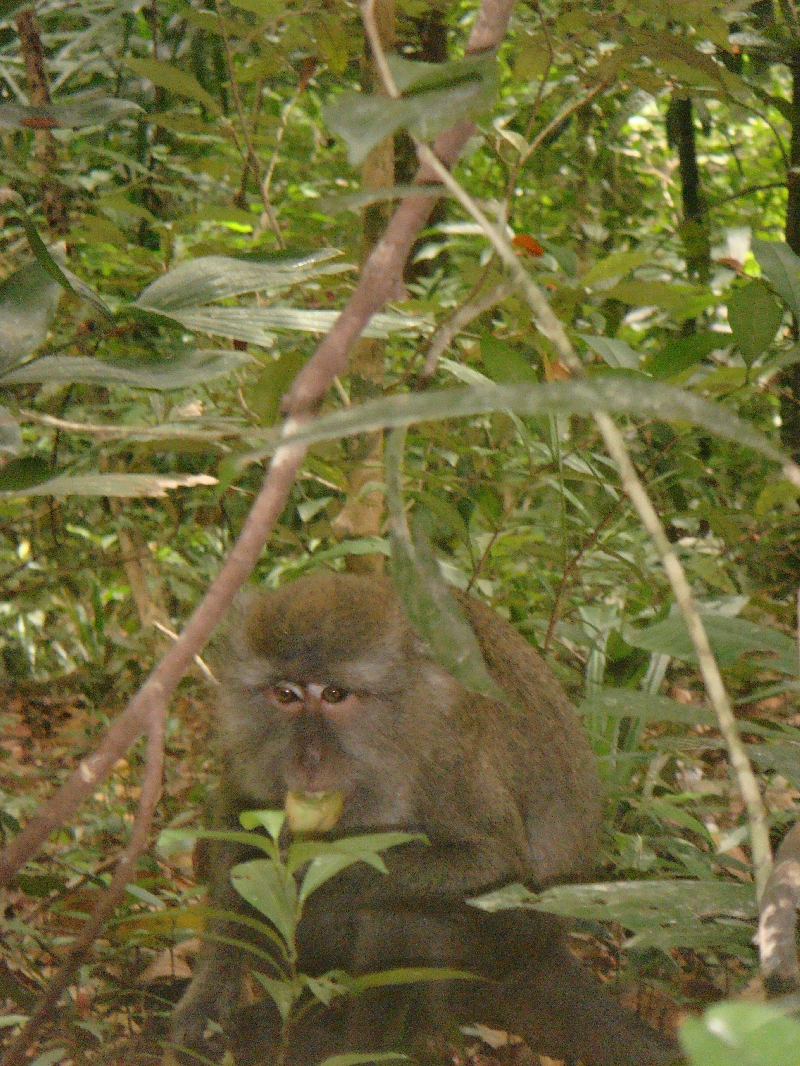 Spotting wild monkies on Lanta, Thailand