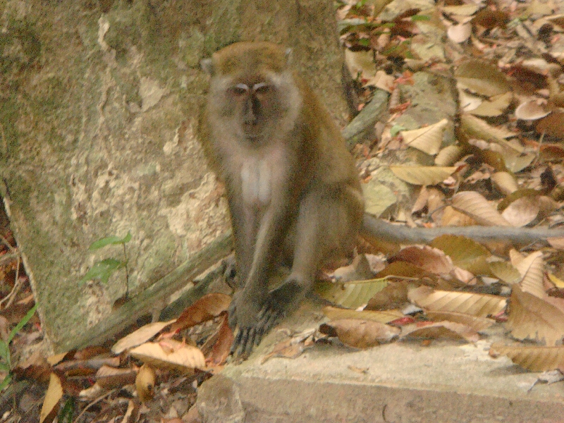 Curious monkey photos, Thailand
