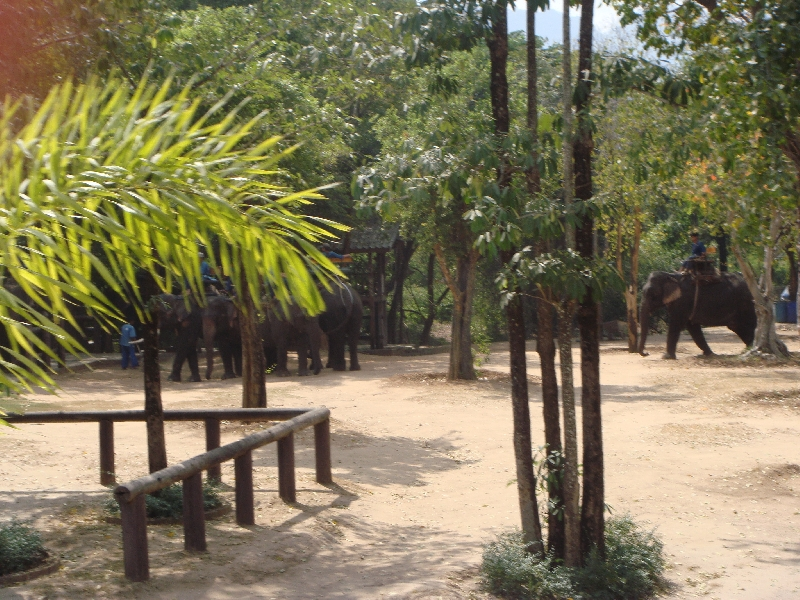 Walking through the elephant park, Thailand