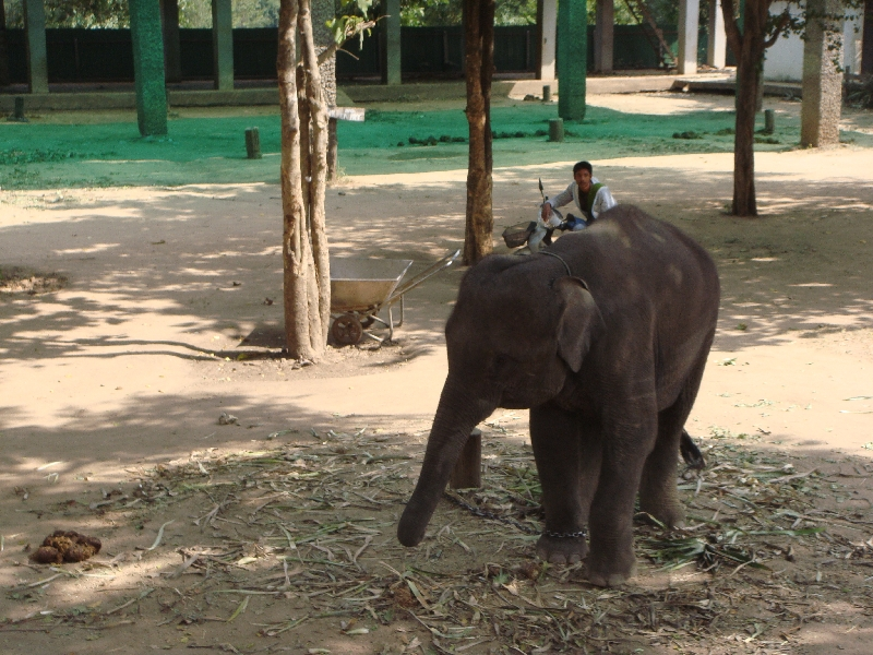 The Elephant Park in Kanchanaburi, Thailand