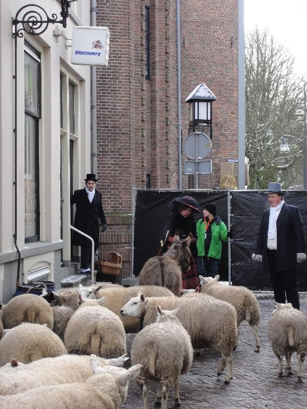 Real sheep at Charles Dickens in Deventer, Netherlands