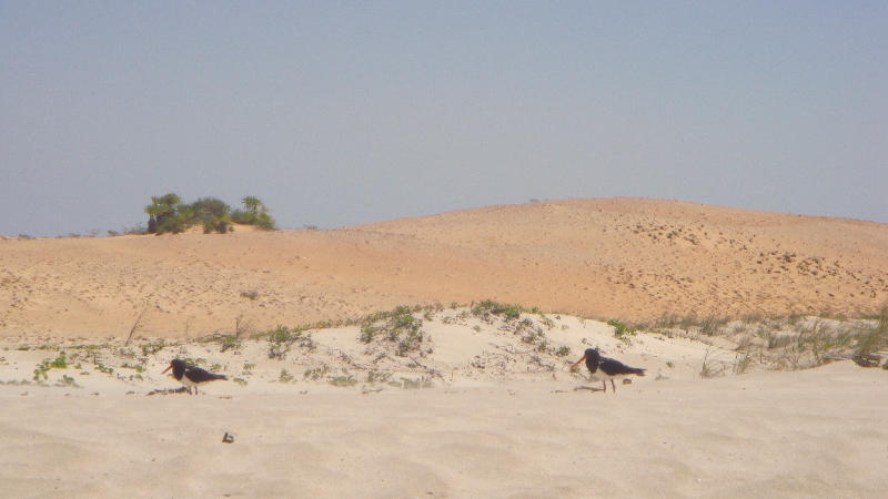The protected sand dunes in Cape Leveque, Australia