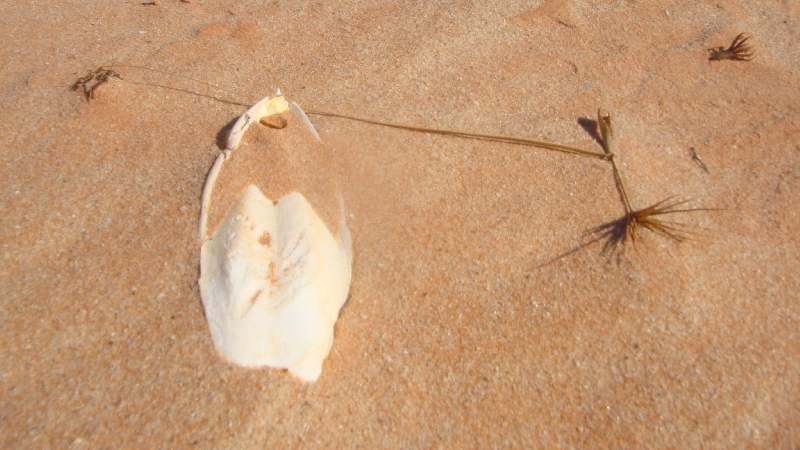 Fish bones on the beach at Cape Leveque, Australia