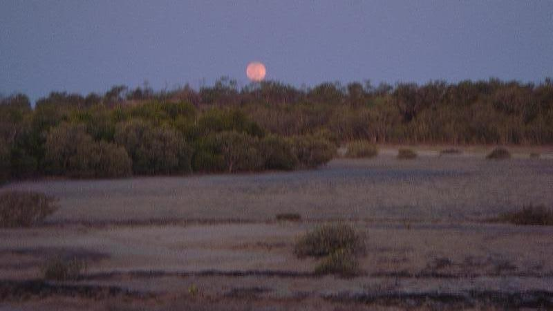 The mangroves at sunset, Cape Leveque Australia