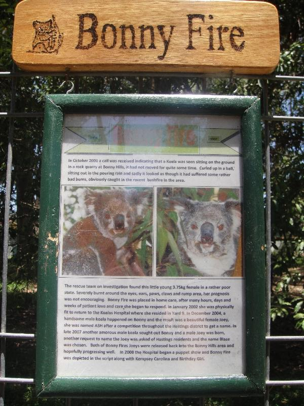 The yard of Koala Bonny fire, Port Macquarie Australia