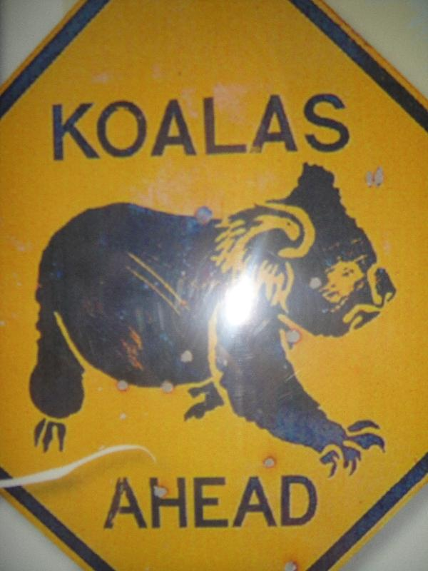Port Macquarie Australia Koalas road sign in Port Macquarie