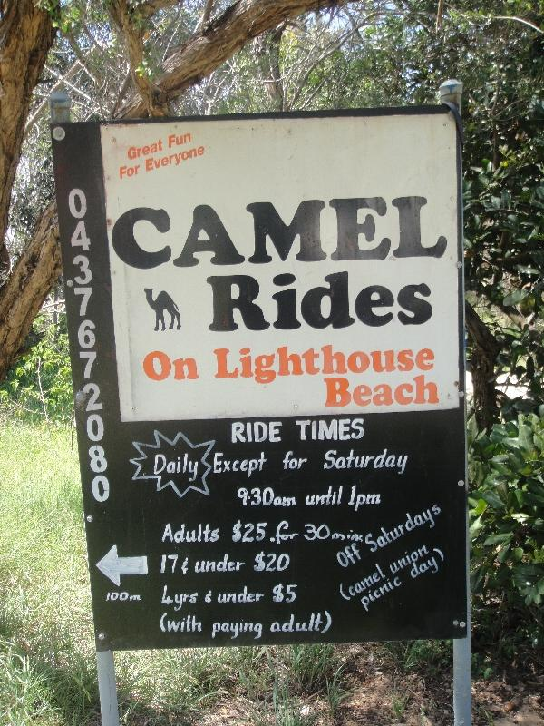Camel Rides on Matthew Flinder Dr., Port Macquarie Australia