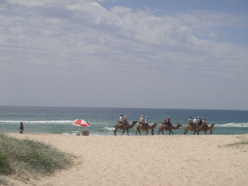 The camel caravan on Lighthouse beach, Australia