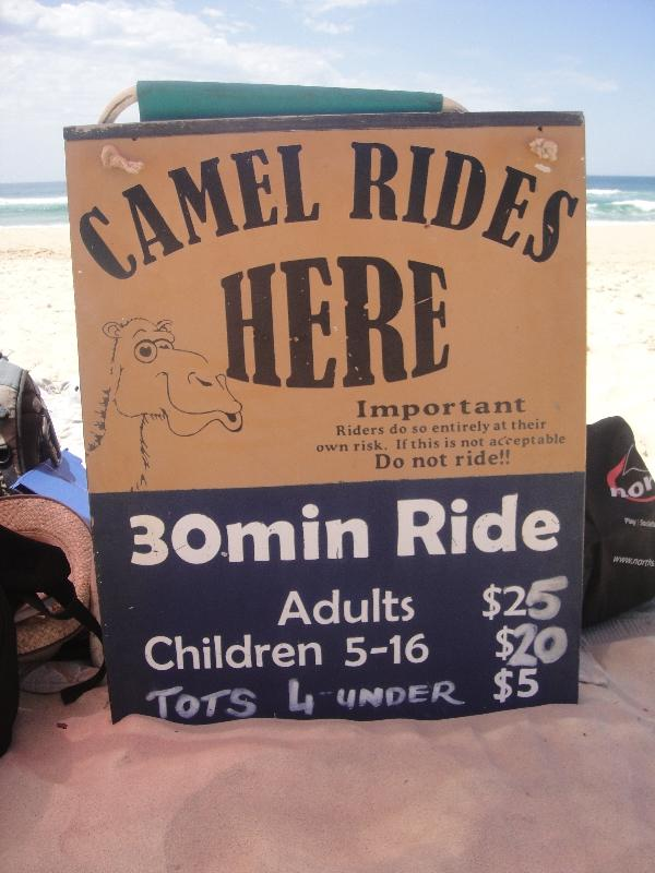 Camel Rides on the beach in Port Macquarie, Australia