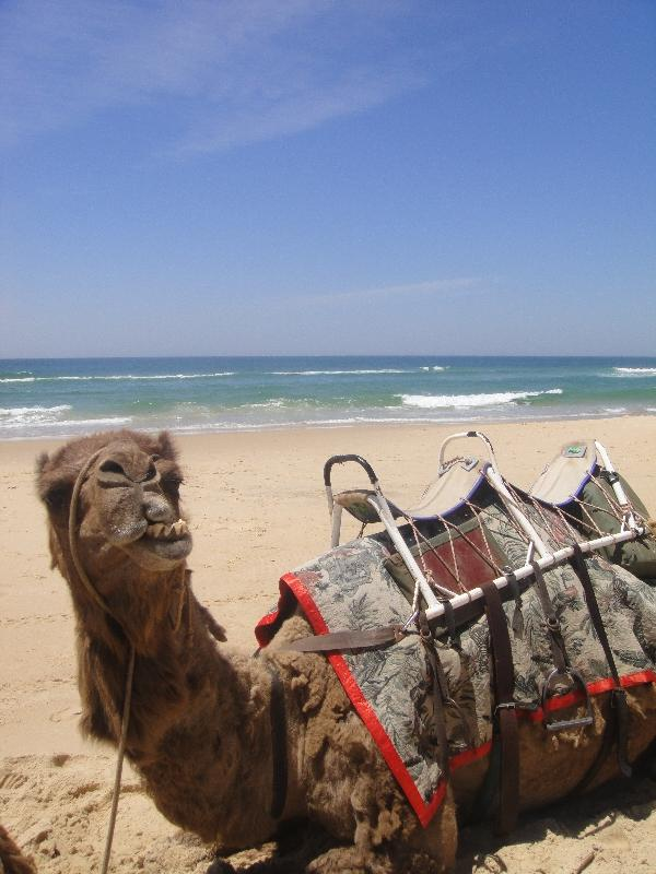 Port Macquarie Australia Thats my camel!