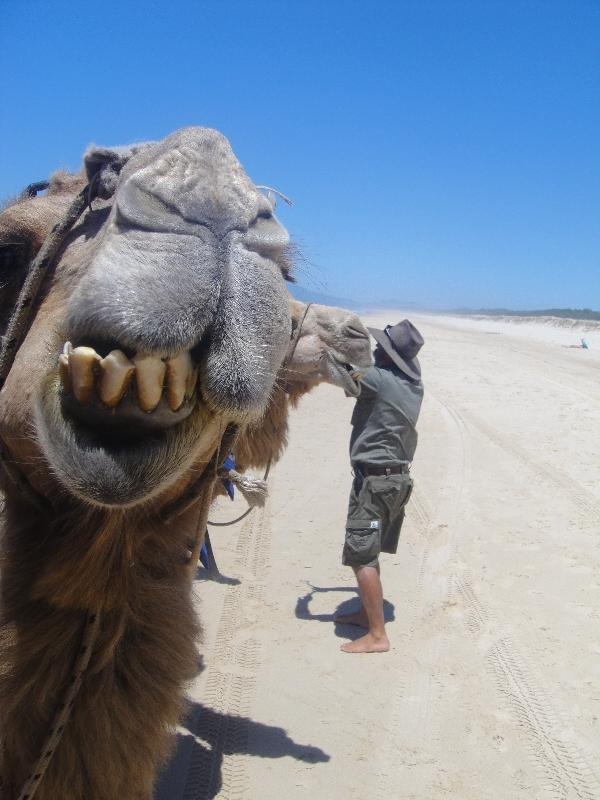 The camel and his guis, Australia