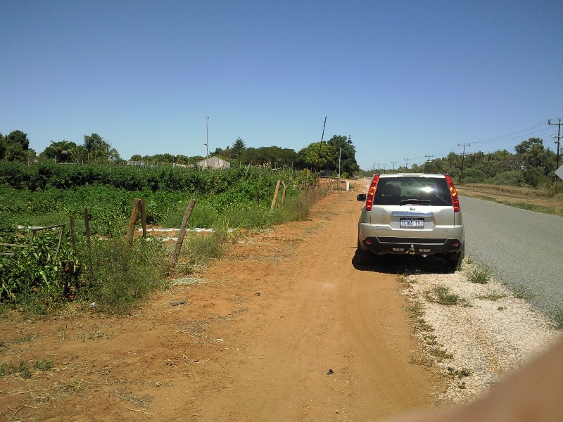Fruit picking in Carnarvon, WA, Australia