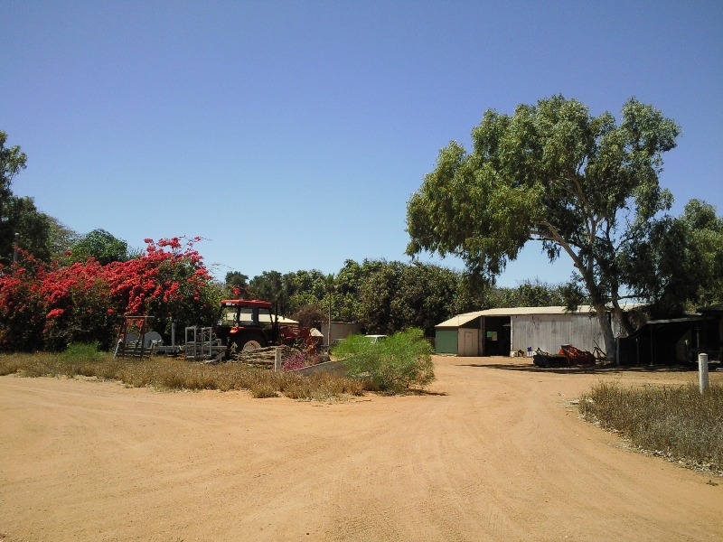 One of the many farms around, Carnarvon Australia