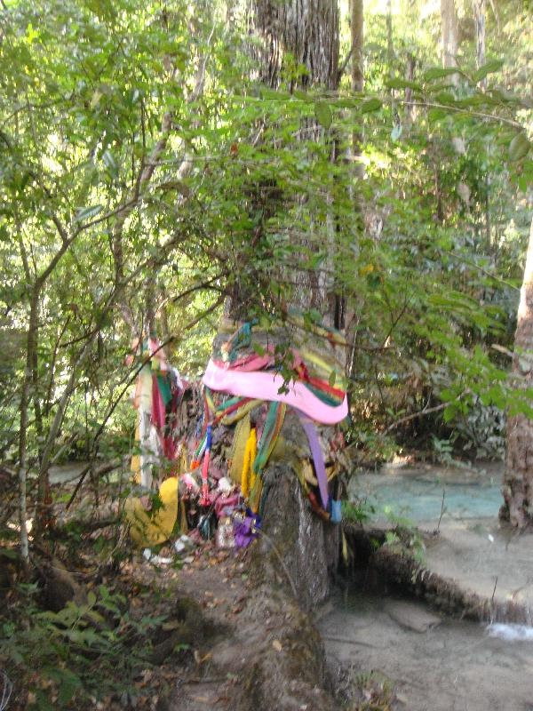 Local Thai offerings on the trees, Kanchanaburi Thailand