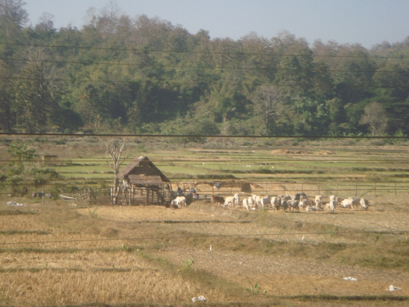 Photos of Rural Thailand, Thailand