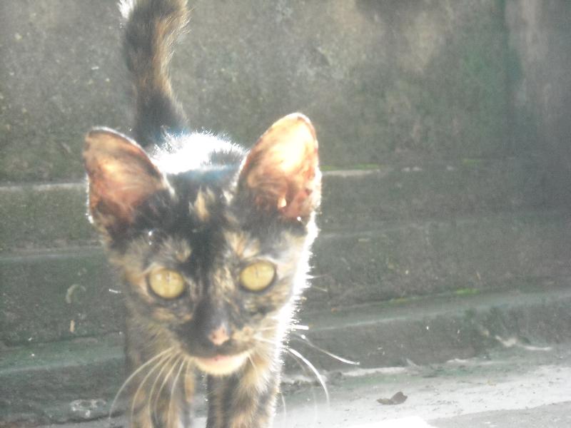 Street kitty kat in Vuentiane, Laos