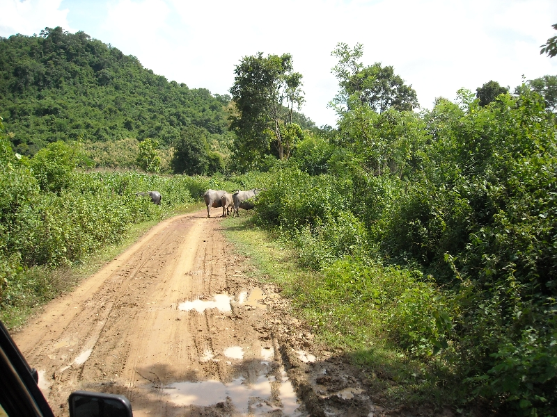 Driving to the Mekong River, Luang Prabang Laos