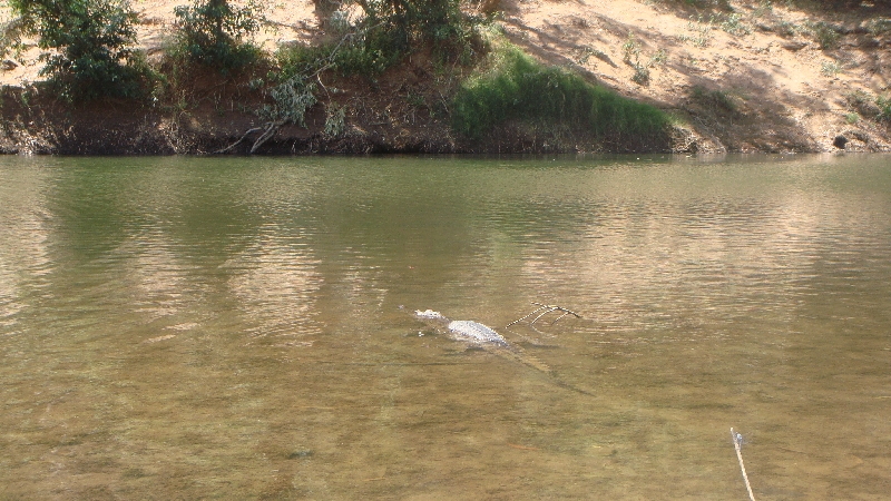 Crocodiles at Windjana Gorge, Australia