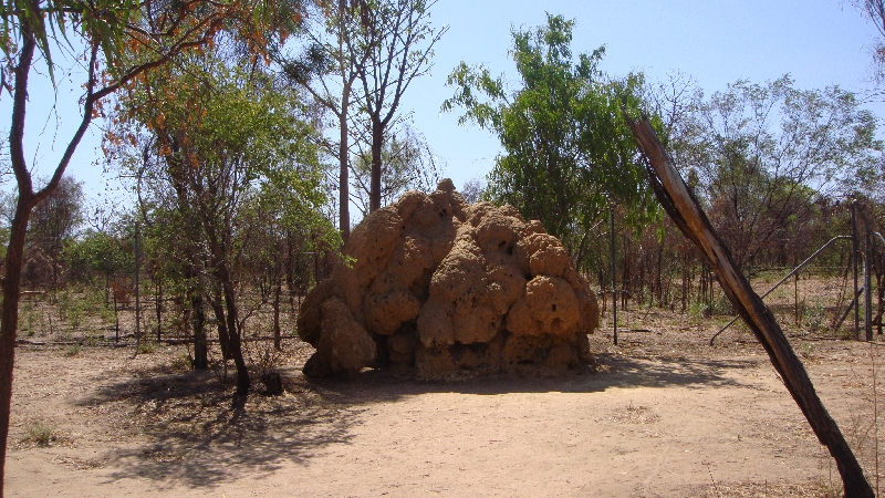 The Boab Prison Tree south of Derby Australia Trip Photographs