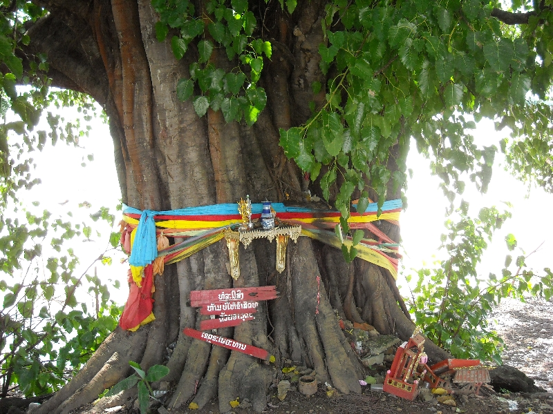 Colourful offerings on a tree, Savannakhet Province Laos